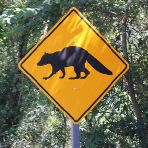 coati crossing