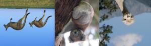 faune australe